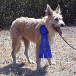 Xelie wins first place at Border Collie Trial!